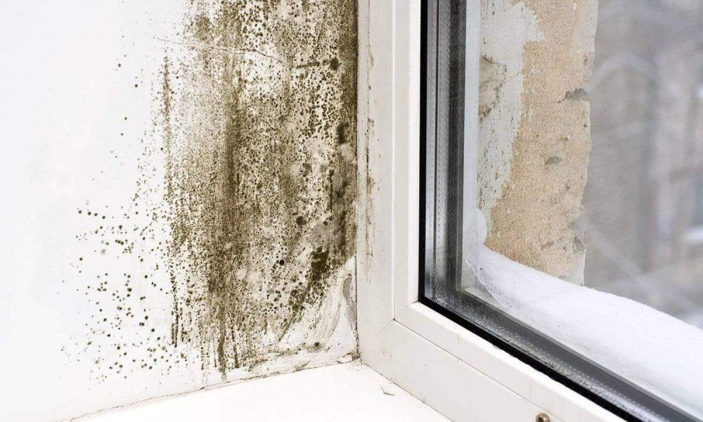 Comment garder les carreaux de plafond à l'abri d'une épidémie de moisissure