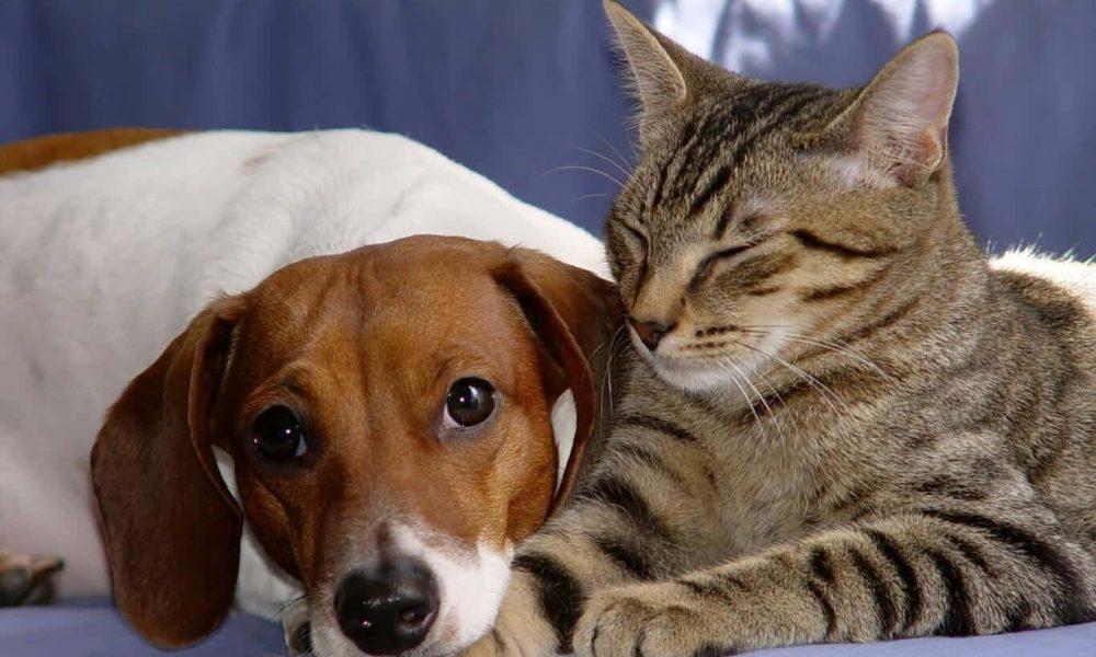 Choisir le meilleur traitement antiparasitaire pour son chat
