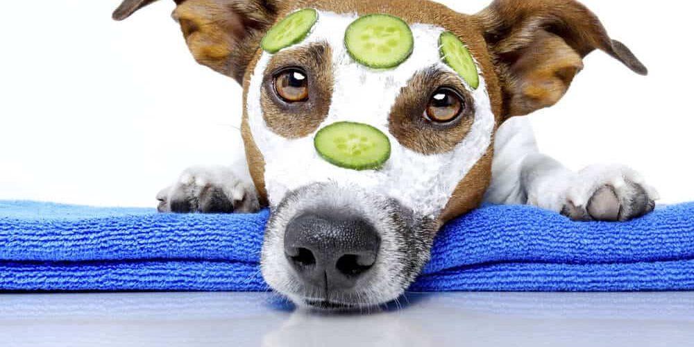 Reconversion coup de cœur : cours de toilettage canin ?