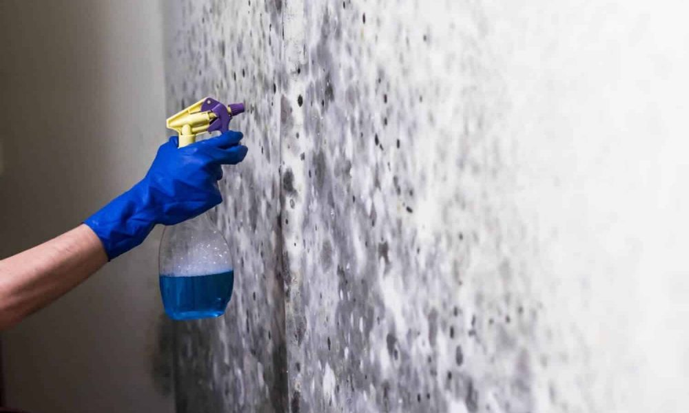 Nettoyage-de-moisissures